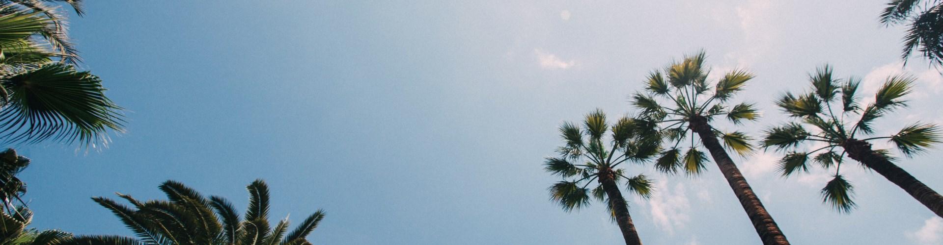 חוף התמרים עכו - חוות דעת